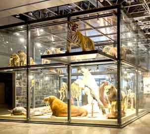 Natural History Hall